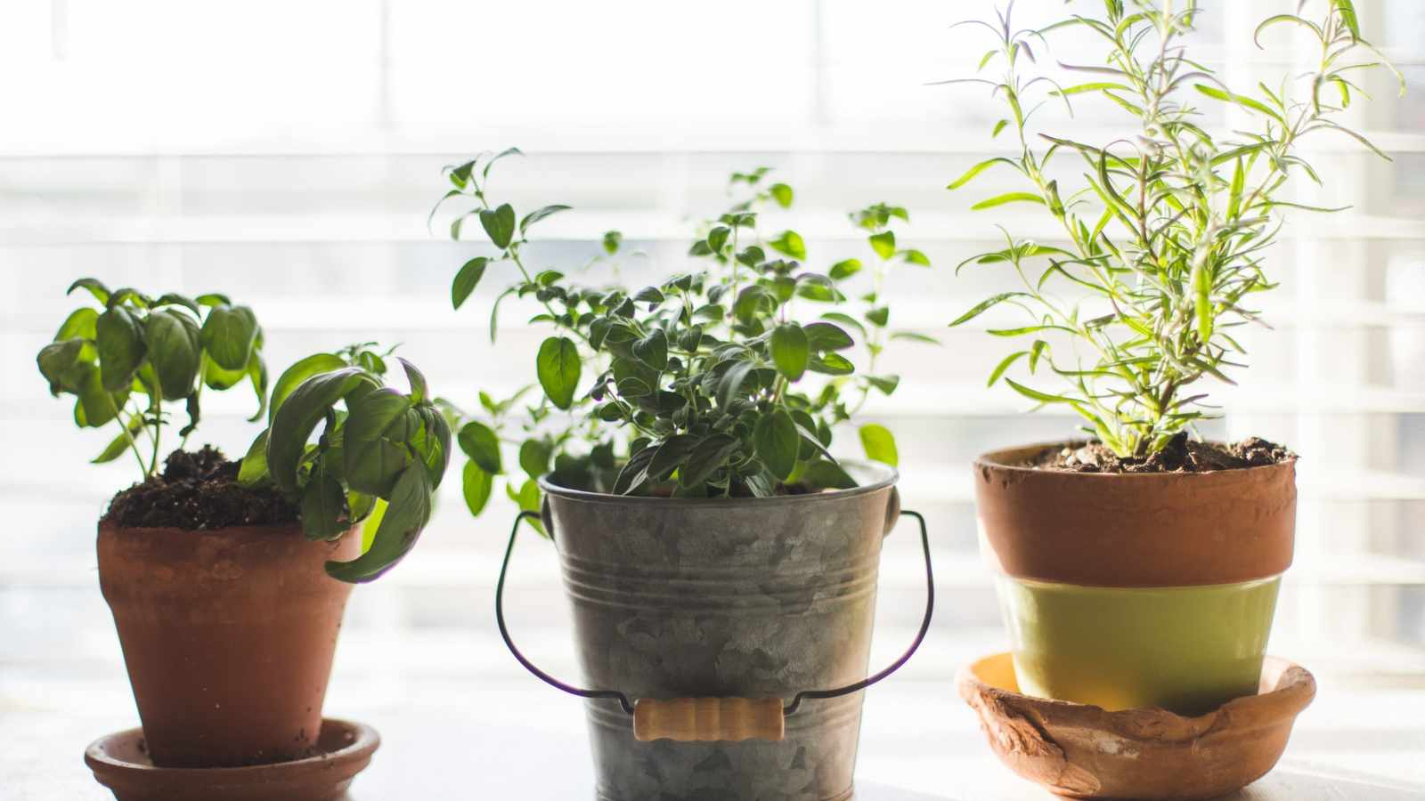 Create an Indoor Herb Garden: 11 Tips to Grow Your Herbs