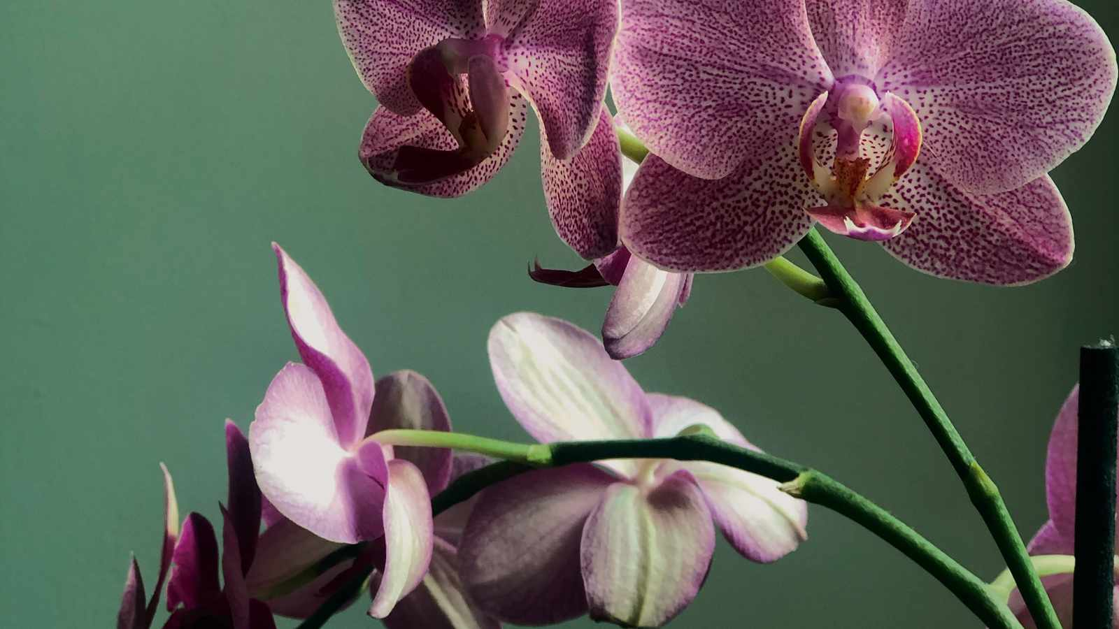 Three reasons why your house plants are not doing well