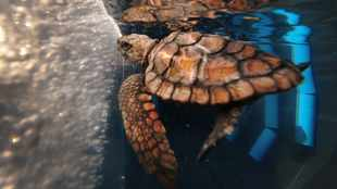 Humans have to reduce global plastic dependency to save the planet's turtles