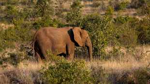 North West province budget trips: See animals, explore mazes and more