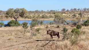 Tourism Month: Mpumalanga launches tourism expo to help SMMEs affected by pandemic