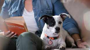 Why pet insurance is so important