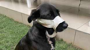 dotsure.co.za covers surgery bills for brave dog shot in the face defending owners