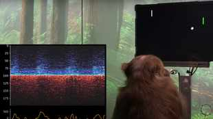 WATCH: Monkey plays Pong with his mind using Neuralink