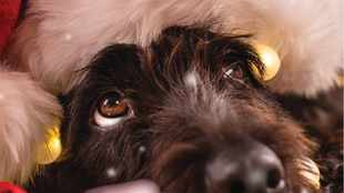 IOL Pets issue 3: Spoil your fur babies this Christmas