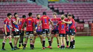 Lions purring in their den as they await Covid-19 test results