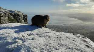 PICS: Table Mountain covered in snow as temperature drops to 2 degrees Celsius