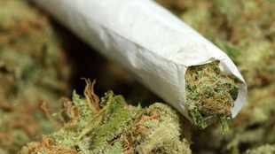 Even moderate dagga use for teens can cause poor cognitive functioning - study