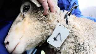 'Gross cruelty' towards the consignment of sheep and cattle headed for the Middle East