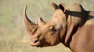 MEC lauds concerted  conservation efforts on World Rhino Day