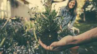 10 gardening dos and don'ts