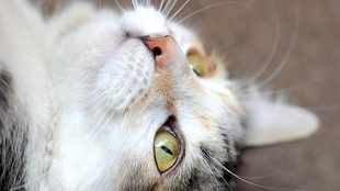 New research discovers innovative ways to tame cats' hunting instinct