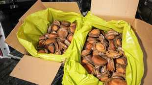 Long-running case ends after abalone syndicate members convicted on 260 counts