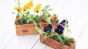 An ode to the edible pansy