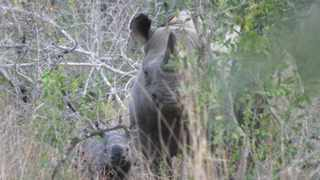 A Scottish game ranger student was being cared for in a KwaZulu-Natal hospital after sustaining critical injuries after an encounter with a black rhino in Northern Zululand