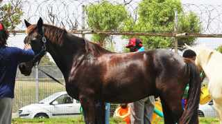 A Valkenberg Hospital patient has taken part in an equine therapy pilot project, which the hospital says has benefited participants, improving their ability to work and function in a group. Picture: Valkenberg Hospital