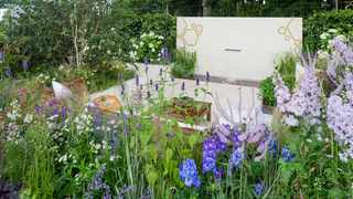 A bee-friendly garden favours flowers in white, blue and purple. Picture: RHS/Neil Hepworth