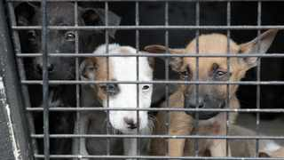 A court ordered the closure of a puppy and dog daycare centre. Picture: AP