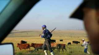 A dairy farm turned out to be a classic South African fraud, prosecutors say: Millions of dollars from state coffers, meant to uplift the poor, vanished in a web of bank accounts controlled by politically connected companies and individuals. Credit Joao Silva/The New York Times