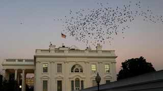 A flock of starlings fly in a murmuration over the White House residence. Picture: Jonathan Ernst/Reuters