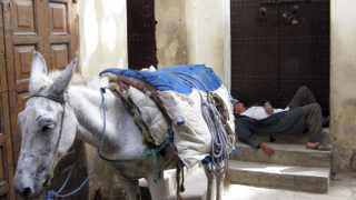 A man sleeps next to his donkey in Fez