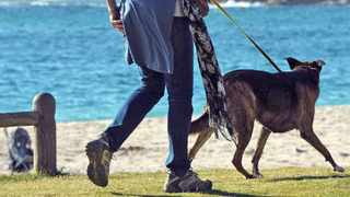 A woman and her dog overlook Camps Bay beach. Picture Henk Kruger/African News Agency (ANA) Archives.