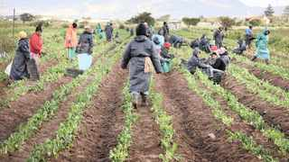 Afasa welcomed the adoption of a report to change the Constitution to allow for land expropriation without compensation. Picture: Tracey Adams/African News Agency/ANA