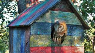 All Owl Rescue Centre conservation products, including owl houses, bat houses and bee hives would be manufactured from recycled plastic instead of wood. Pictures: Supplied