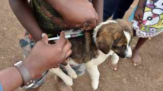 Animal Welfare Society of South Africa have urged pet owners to vaccinate their pets Parvovirus and Distemper.Picture: Bongani Shilubane/African News Agency(ANA)