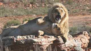 Aquila Private Game Reserve & Spa takes home prestigious sustainable tourism award. Picture: Supplied.