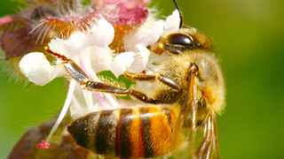 Autumn blooms provide valuable nectar for bees during the cooler months. Picture: Lukas Otto