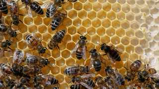 Bees are seen on a honeycomb at an apiary, in Casablanca. Reuters