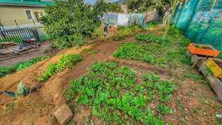 Bo-Kaap residents have started food gardening to counteract the rapid rate of urbanisation. Picture: Ibrahim Christian