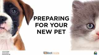 Checklist of essentials you need when preparing for a new kitten or puppy