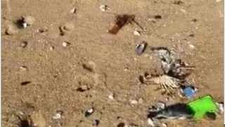 Dead fish and crustaceans wash up on Umdloti Beach on Thursday.
