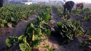 During a virtual panel discussion this week by advocacy group FairPlay and Food for Mzansi, agricultural experts said affordability of farm produce and high unemployment are the death knell for South Africa's food sustainability. Photo: Ayanda Ndamane/African News Agency(ANA)