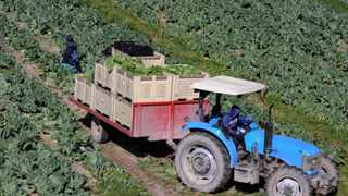 ECONOMIST Wandile Sihlobo says local tractor sales for the first half of this year were up 27 percent year on year at 3 385 units. Picture: Tracey Adams, ANA.