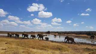Elephants at a watering hole. Beth Mortimer