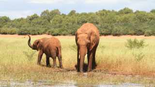 Elephants quench their thirst at Lake Kariba near Songo wildlife area in Zimbabwe. Picture: The International Anti-Poaching Foundation (IAPF)