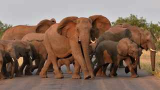 File photo: One of the rules of game drives is to never get out of your car. Never. Picture: Thobile Mathonsi