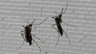 In contrast, Aedes mosquitoes are mostly encountered during the day. Picture: AP