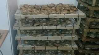 Kraaifontein SAPS members delivered a massive blow to the illegal abalone trade when they seized dried abalone worth millions on Tuesday at about 12:30. Picture: SAPS