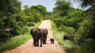 Kruger National Park on high alert as tropical storm Eloise hits Mozambique. Picture: File Image