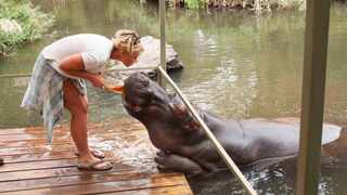 Meet Jessica the friendly hippo when you visit Limpopo. Picture: Supplied.