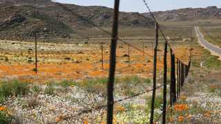 'More Than Daisies – a hidden history of Namaqualand and the Richtersveld' by David Fleminger. Picture: David Fleminger