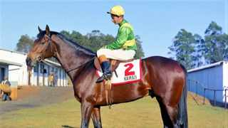 Mystic Guide, the impressive winner of Saturday night's Dubai World Cup, has the great South African thoroughbred Hawaii, pictured, in his pedigree. Photo: Supplied