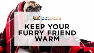 Online store loot.co.za has a large selection of beds and cushions to choose from to keep your pets healthy and happy through winter.