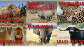 Only one of the famed Big Five is not on the endangered list.