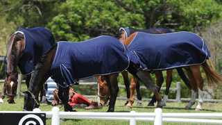 Over 2 000 a year thoroughbred racing and show-jumping horses retired when performance levels wane fall through the cracks to the informal market where they hew wood, scrap metal and water carts to a secondary billions rands market that does not realise its potential. Picture: Leon Lestrade