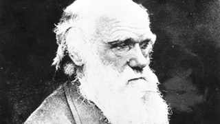Portrait of British scientist Charles Robert Darwin, founder of the theory for the evolution of life. Born February 12, 1809 and died April 19, 1882. Photo was made shortly before his death. (AP Photo/Str)